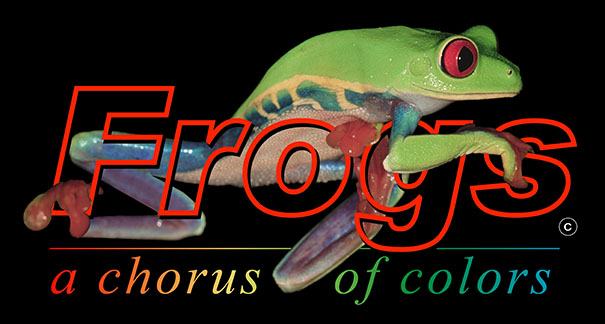 Frogs - A Chorus of Colors | Traveling Exhibition by Peeling Productions