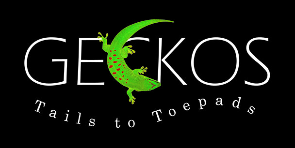 Geckos - Tails to Toepads | Traveling Exhibition by Peeling Productions