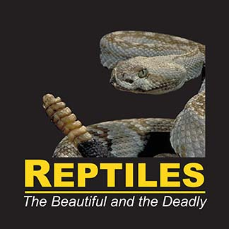 Reptiles: The Beautiful and the Deadly | Traveling Exhibition by Peeling Productions