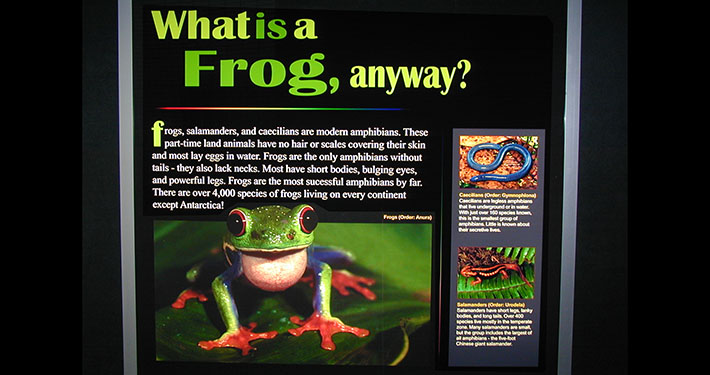 Frogs - A Chorus of Colors by Peeling Productions
