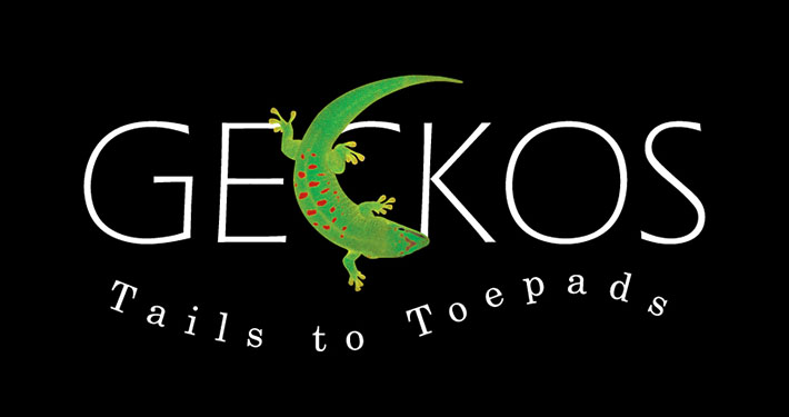 Geckos - Tails to Toepads by Peeling Productions